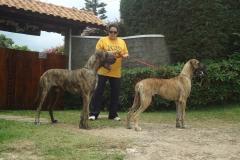 dogue-alemao12